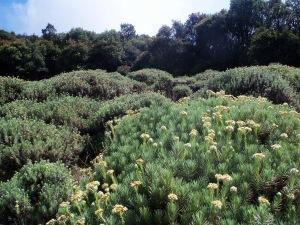 Taman Edelweiss